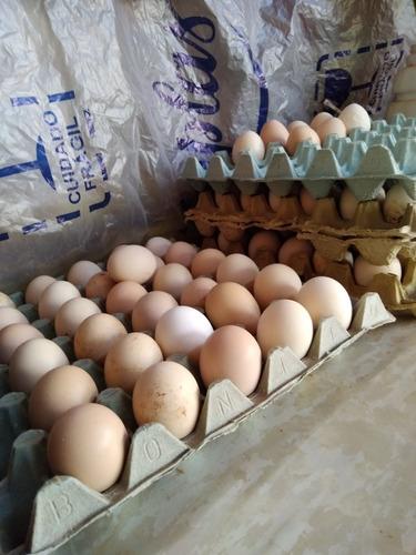 Imagem 1 de 1 de Vende-se Ovos De Galinha Caipira