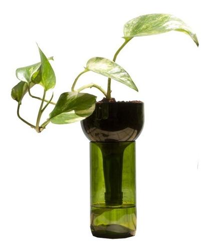 Scindapsus Little Plant 24 Sin Soporte, Maceta Autorregante