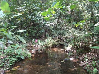 Terreno 10 Has Cerca Al Guayabo Sitio Progreso Zona Minera