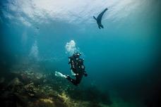 Fun Dive (buceo / Scuba)