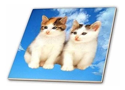 3drose Ct_4335_6 Azulejo De Vidrio Two Kittens, 6 Pulgadas