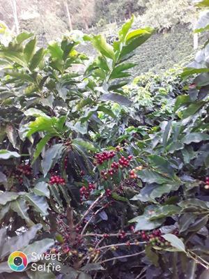 Finca Cafetera A La Venta En El Tolima (municipio Ibagué)