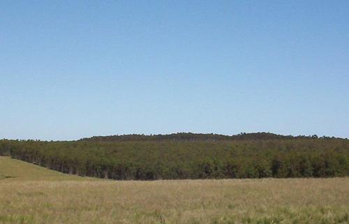 Campo De 141 Has En Florida. 100% Forestal.  Crecimiento De Madera De 5 Años (eucalyptus Colorado). Se Cuenta Con Proyecto Forestal Del Mgap. Oportunidad Única!  Sobre Ruta 7 A 100 Km De Montevideo!