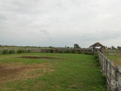 Fazenda Para Venda Em Cáceres, Centro - 1009