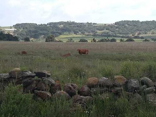 Rancho En Venta En Epitacio Huerta (michoacan)