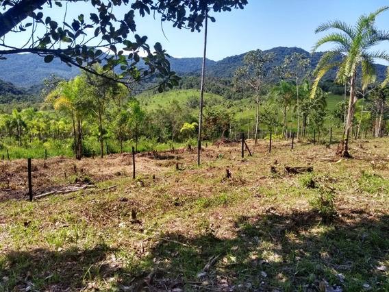 Miracatu/iguape/lindo Terreno Com Pomar, Bosque /ref:04990