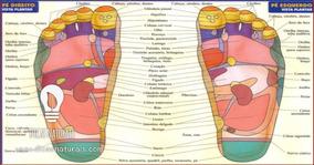 Mapa Livro Resumão Reflexologia Podal Colorido