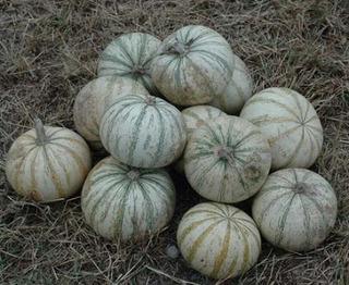 Semillas De Calabaza Pipian Para Cultivo