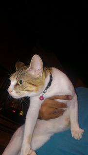 Doy Gatica En Adopción
