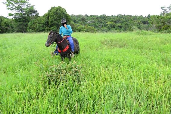 Fazenda Para Comprar No Zona Rural Em Nazaré/ba - 585