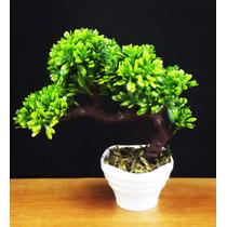 Bonsai Vaso Branco Mini Árvores Artificial Plantas Arranjos