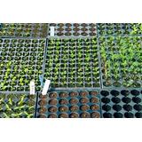 Bandejas De Germinación Semilleros, Plantulación, Almacigos