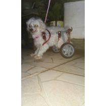 Cadeira De Roda Para Cão E Gato - Até 5kg