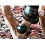 Mudas De Jabuticabeira Produzindo.grandes Lindas.bonsai Tbm