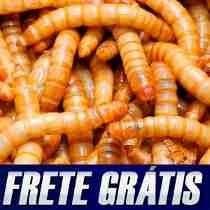 Tenebrio Molitor, Tenebras Vivas, Frete Gratis (150 Larvas)