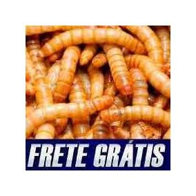 Tenebrio Molitor, Tenebras Vivas, Frete Gratis (160 Larvas)