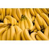 Kit Super 4 Bananas Nanica Caturra Baé Cambota 4 Rizoma Muda