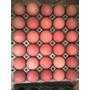 Huevos De Campo Gallinas Criadas En Libertad 2 Maples