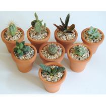 Maceta De Barro 5cm Con Plantas Suculentas O Cactus