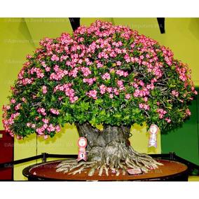 100 Sementes De Rosa Do Deserto( Adenium Obesum )mix De Core