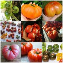 Mix ,110 Semillas De Tomate Heirloom De Herencia