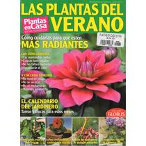 Plantas En Casa - Las Plantas Del Verano - Cómo Cuidarlas
