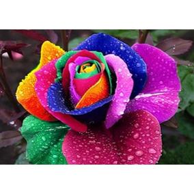 90 Sementes Rosas Exóticas 9 Tipos E Cores - Frete Grátis