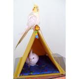 Cabana Para Calopsitas Toca Agapornis, Periquitos E Hamsters