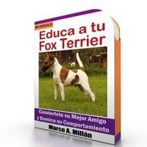 Como Educar A Un Fox Terrier - Guía De Adiestramiento Raza
