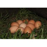 Huevos Orgánicos Grandes Castaños De Campo Venta Por Docena