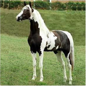 3 Dvd´s Cavalos - Monty Roberts + Redeas + Casqueamento!!