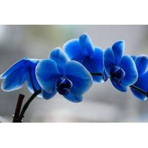 10 Sementes De Orquídea Para Jardim E Mudas - Cores Variadas