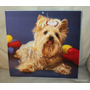 Fotos Perrito Yorkshire Terrier