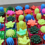 Cactus Plantas Magicas Crecen Su Tamaño Geek Suculenta