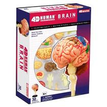 4d Master Modelo Anatómico Cerebro Humano 4d Vision