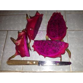 Pitaya Casca Vermelha Polpa Vermelha 5 Mudas Produz Em 1 Ano