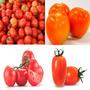 4 Variedades Sementes De Tomate P/ Horta Mudas Vaso Campo