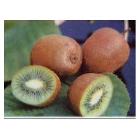 25 Semillas De Actinia Chinensis - Kiwi, Grosella China C990