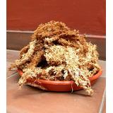 Musgo Sphagnum En Hebras 80 Lts Para Cultivo De Orquideas