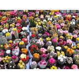 Semillas De Cactus Para Coleccionar (600)- Envio Gratis