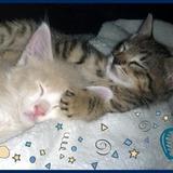 Gatitos Bebes En Adopcion! Mimosos Y Juguetones!
