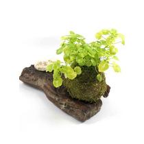 Kokedama Lamium - Kok Arte Natural