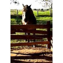 Égua Mangalarga Percheron