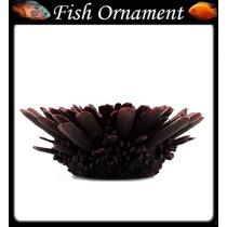 Enfeite De Resina Soma Coral Ouriço Vermelho Fish Ornament
