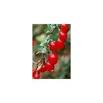 100 Sementes Goji Berries - Importadas Do Local De Origem !