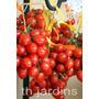 Sementes De Tomate Do Vesúvio - Frutos Jardim Mudas Bulbos