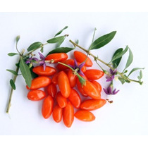 100 Sementes Da Super Fruta Goji Berry Do Tibet