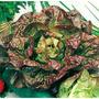 Kit Cultivo De Lechuga En Hidroponia + Fertilizante + Otros