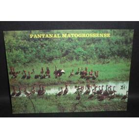 Cartão Postal Marrecos Nas Lagoas Da Trnspantaneira .
