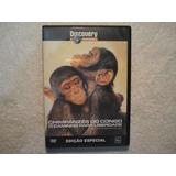 Dvd Chimpanzés Do Congo Caminho Liberdade Original Lacrado
